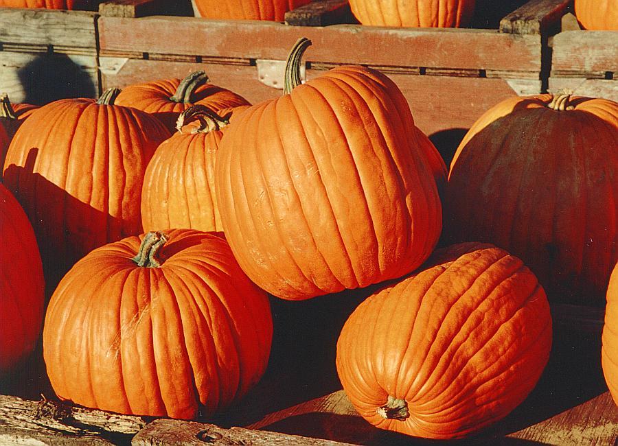 South Lyon Pumpkin Fest